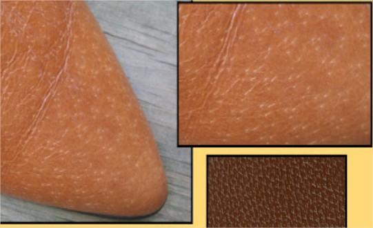cách nhận biết da thật và giả da